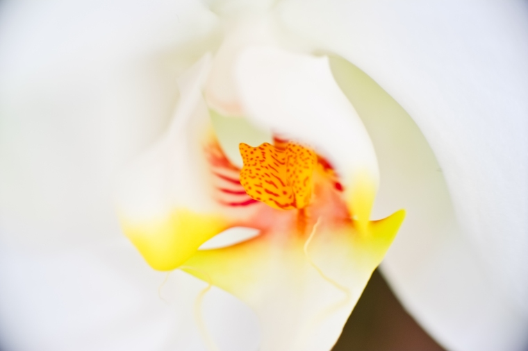 Shot at f/2.8 - w/ 25mm extension tube